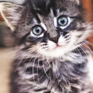 Почему...мы так любим картинки с котиками?