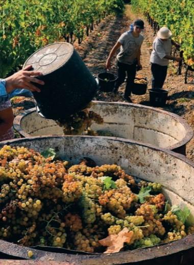 Виноград и закон