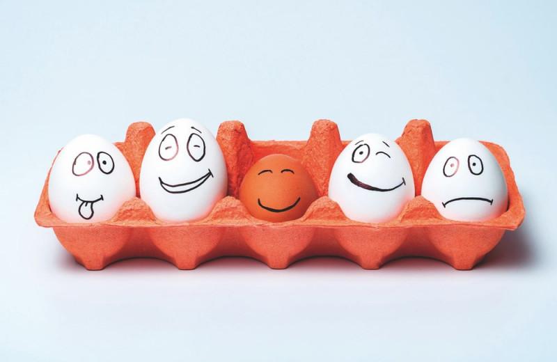 Первым было яйцо