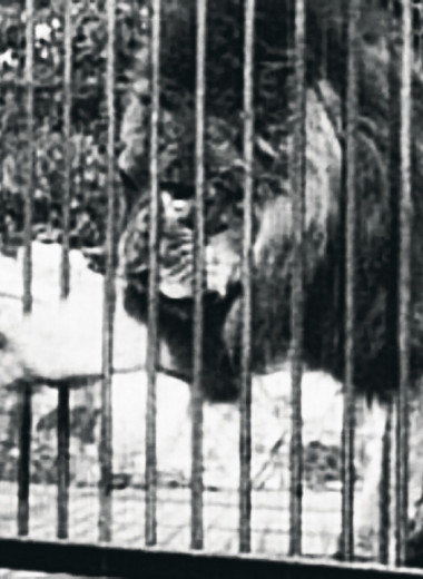Как животные входили в историю кино