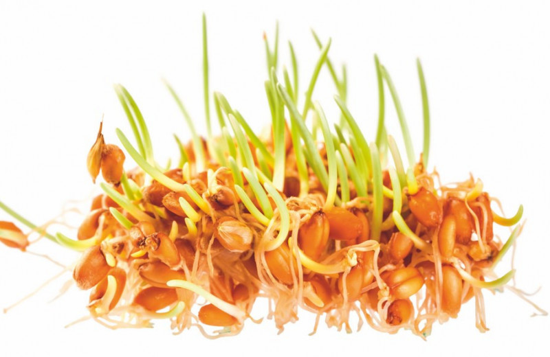 Про ростки и листики