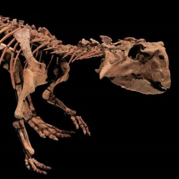 Кемеровский динозавр