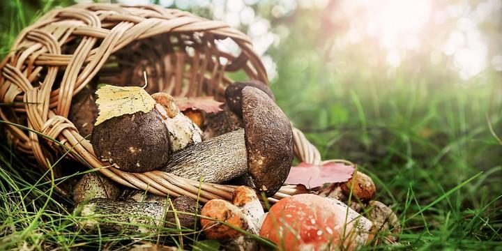 Чем опасны съедобные грибы