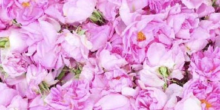 Роза, страстности эмблема
