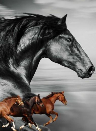 Как Крепыш со Сметанкой коневодство поднимали