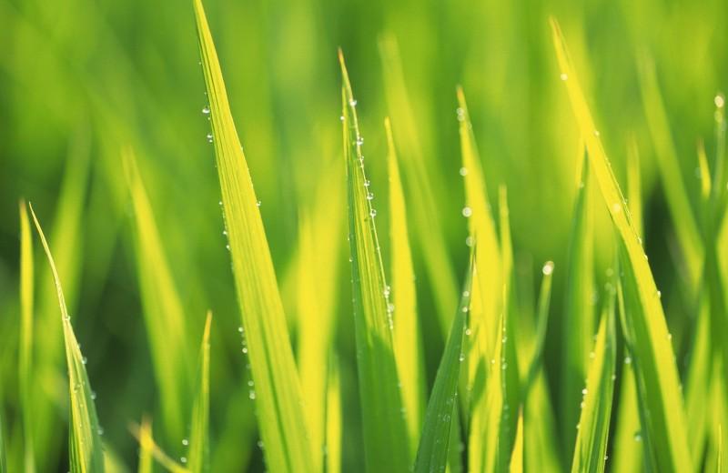 Как проверить «зеленый» бренд на правдивость