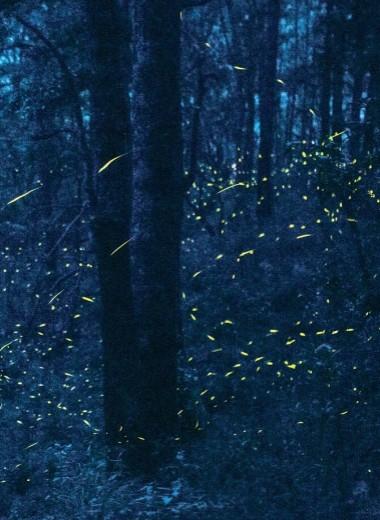 Лесные огоньки