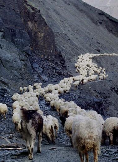 Путь пастуха