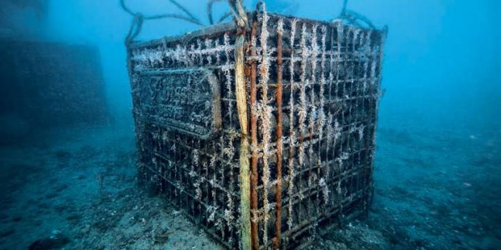Вино из морских погребов