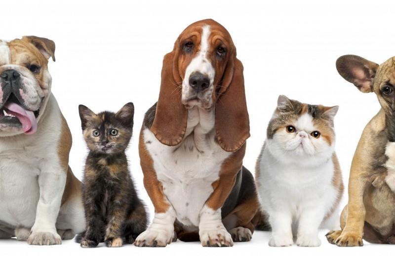 Высокие технологии для собак