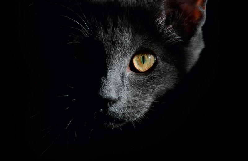 Кошка на пути домой