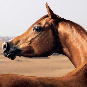 Правда ли лошадь грустит