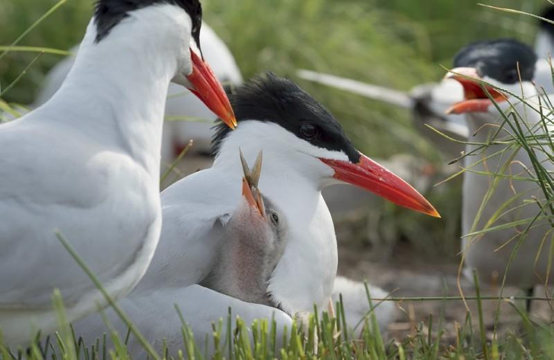 Птицы на Байкале